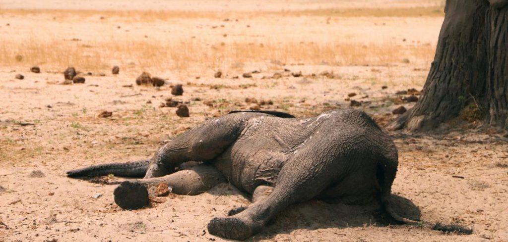 toter elephant 1024x489 - Images by News