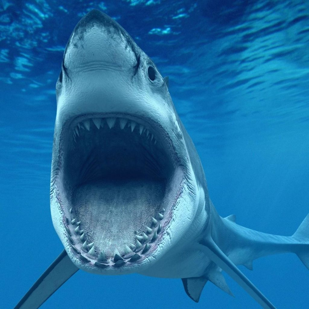 white shark 1024x1024 - Images by News