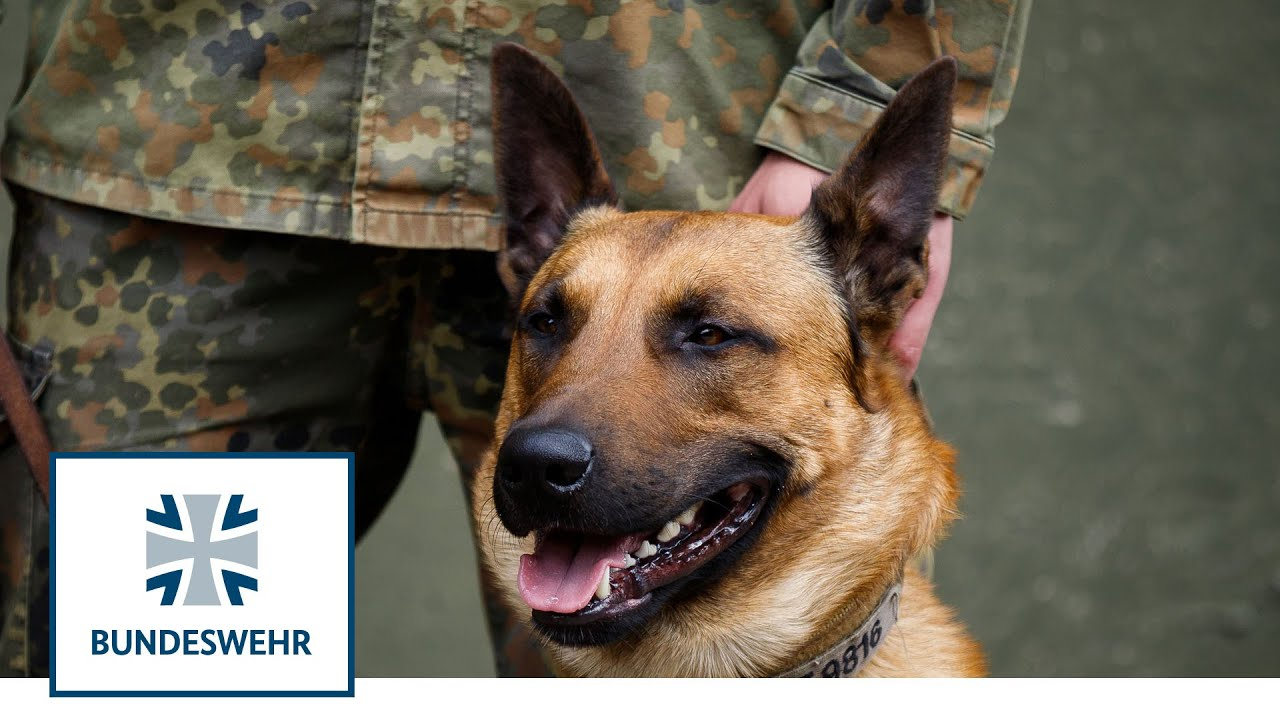 Diensthunde-der-Bundeswehr-erschnuffeln-Corona
